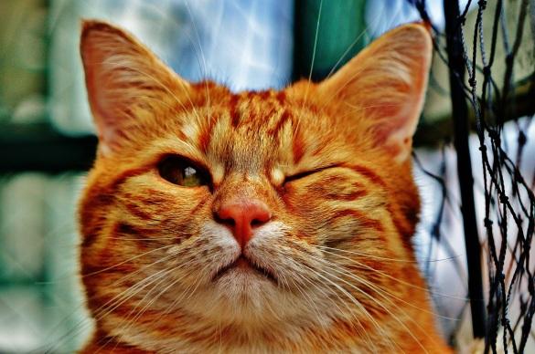 cat-1333926